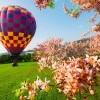 Zbor cu balonul de aer cald (gift card)