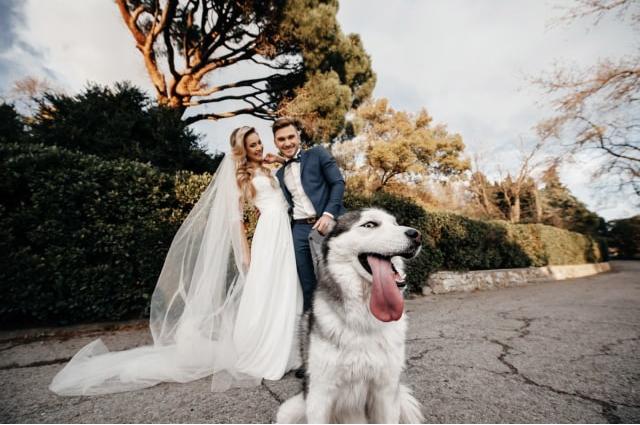 Животные на свадьбе: главное — эмоции