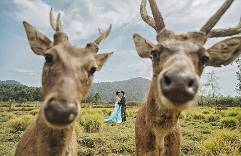 FOTO / Cele mai amuzante fotografii de nuntă