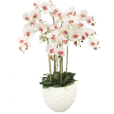 Орхидея Моли 3 веточки