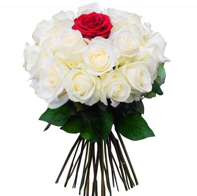 35 Trandafiri alb-roşii (50-60 cm)