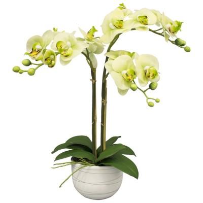 Желтая Орхидея 2 ветви